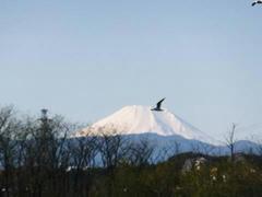 多摩川・富士山