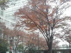 都会の晩秋