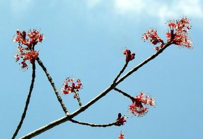 不思議な赤い花