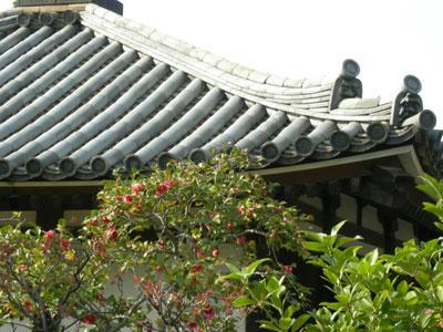 開山堂の屋根とのりこぼしの椿