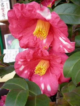 四月堂の鉢植えの花