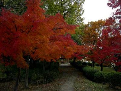 大谷山自然公園の紅葉1