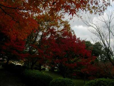 大谷山自然公園の紅葉2