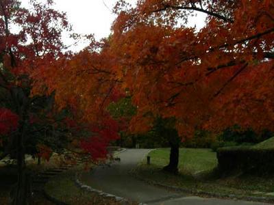 大谷山自然公園の紅葉3