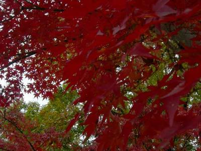 大谷山自然公園の紅葉4