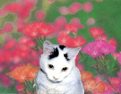 モモちゃんは花の中で見ている。
