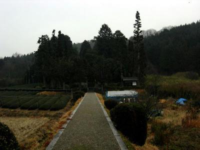 茶畑に囲まれた山陵