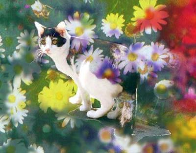 センセンは花の中を行く