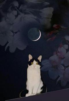 ニセンのお月様