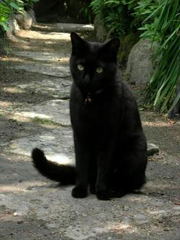 黒猫は可愛い!