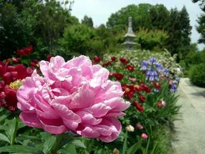花の寺です。