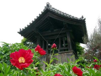 鐘楼と赤い芍薬