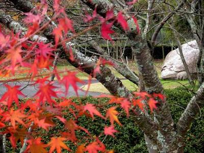 飛鳥資料館の亀石