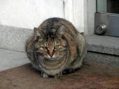 奈良町にいた猫様