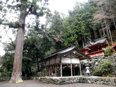 桜木神社の本殿と神杉