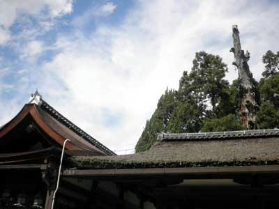 直会殿(葺替え済み)と幣殿(葺替え前)の屋根