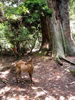 春日の杜の大王と鹿