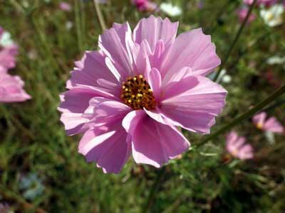 筒状の花弁の花