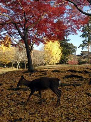 東塔跡にいた鹿