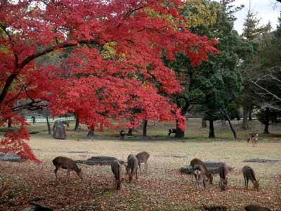 講堂跡の紅葉と鹿