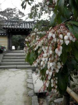 浄瑠璃寺の春?