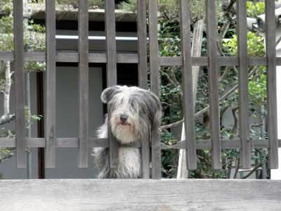 東大寺塔頭にいた犬
