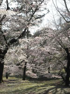 雲の林-東大寺東塔跡