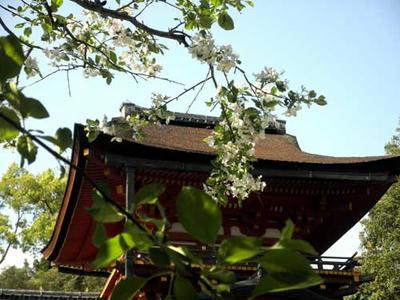 昨年の4月24日の林檎の花