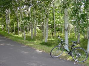 真駒内公園白樺の道