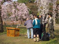 植物園揚琴撮影2