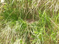 巣の中の小鳥。もちろん接写はできず。<br /><div style=