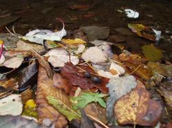 秋の川べり