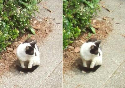 お行儀猫交差法立体写真