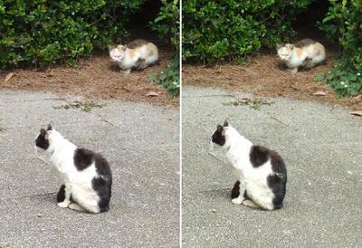 行儀猫と後ろ猫立体写真