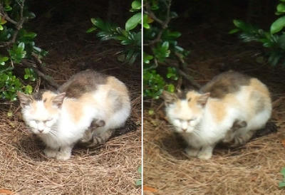 目をつぶっている猫交差法立体写真