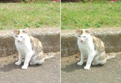 美人猫交差法立体写真