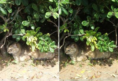 猫、日陰で立体画像