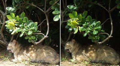 あくび猫立体画像