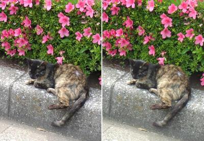 縁石猫立体画像