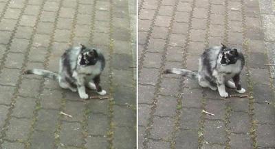 灰色猫交差法立体画像