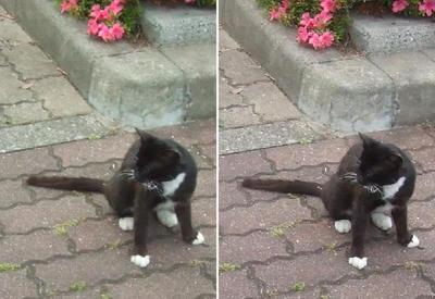 漫画猫交差法立体画像
