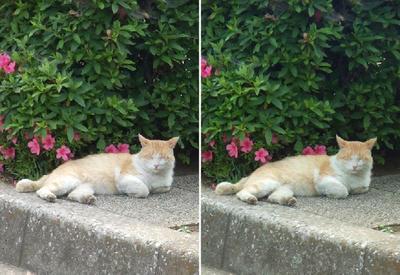 休憩猫交差法立体画像