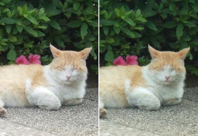 休憩猫アップ交差法立体写真