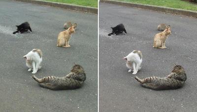 猫の集会交差法立体画像