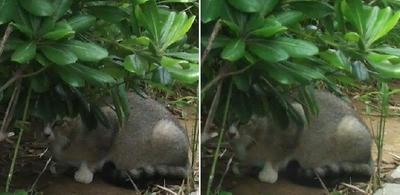 隠れ猫交差法立体画像
