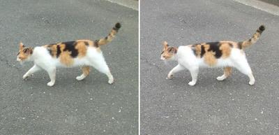 ミケ猫交差法立体画像