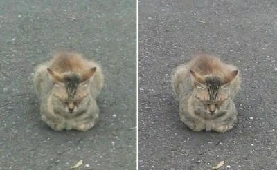 猫っぽい休み方の猫交差法立体画像