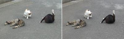 三者三様猫たち交差法立体画像