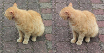 ちょこんとした猫交差法立体画像