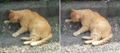 眠り猫交差法立体画像